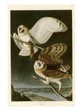 Effraie des clochers Giclée par John James Audubon