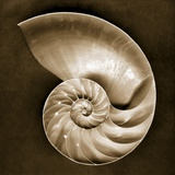 Half Nautilus