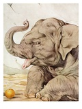 Illustration of Elephant by Edward Julius Detmold
