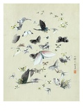 Drawing of butterflies and moths attributed to Settso