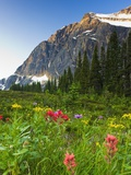 Wildflowers in Cavell Meadows with View of Mount Edith Cavell  Jasper National Park  Alberta  Canad