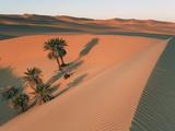 Date palms in a dune near Lake Maflu