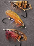Atlantic Salmon Flies Still Life  Canada