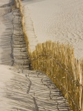 Reed fencing holding sand to prevent desertification