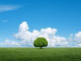 Lone tree in grassland