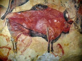 Cave Painting of Bison at Altamira