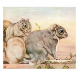 Illustration of Squirrels by Edward Julius Detmold