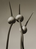 Three Allium by Tom Marks