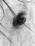 A Close Shot of a Horses Eye with Snow Flakes Taken in Alberta  Canada