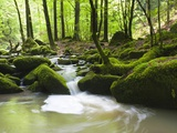 Moss covered rocks in Monbach Creek in the Black Forest