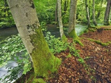River and Beech trees