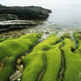 Moss Covered Rocks on Beach in Japan