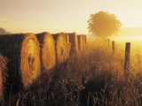 Misty Morning  Farmland and Wheat Straw Rolls  Near St Adolphe  Manitoba  Canada