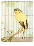 Illustration of Parakeet by Edward Julius Detmold