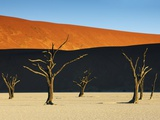 Bare trees at Dead Vlei