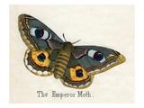 The Emperor Moth