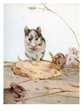 Illustration of Mice by Edward Julius Detmold