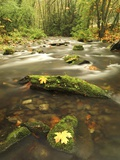 A Stream Flows Through the Rainforest at Goldstream Provincial Park Near Victoria  British Columbia
