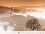 Beech trees in snow covered landscape