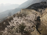 Cherry blossoms along the Mutianyu section of the Great Wall