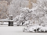 Snow covered trees with a footbridge in a public park  Boston Public Garden  Boston  Massachusetts