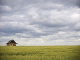 Barley Field and Abandoned Farmhouse  Raymore  Saskatchewan  Canada