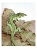 Illustration of Lizard by Edward Julius Detmold
