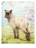 Illustration of Lamb by Edward Julius Detmold