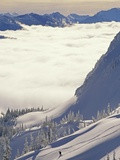 Skier Skiing Fresh Deep Powder in Backcountry Near Fernie  East Kootenays  British Columbia  Canada