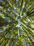 Old growth cedar, hemlock, fir and Sitka spruce forest in fall Papier Photo par John Eastcott & Yva Momatiuk