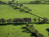 Rich green pastureland in countryside of Northern Ireland
