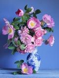 Complicata and Felicia Roses