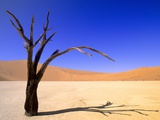 Dead Vlei  Soussusvlei  Namibia  Africa