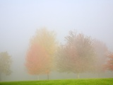 Fall trees shrouded in mist