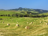 Hay rolls in a mown field