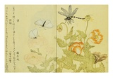Illustration from A Picture Book of Selected Insects