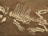 Pelycosaur fossil found in Texas