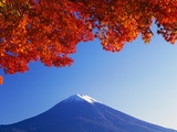 Maple Tree Branch near Mount Fuji