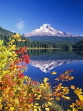 Autumn Leaves Growing Near Mount Hood and Trillium Lake