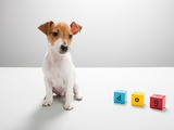 Jack russell puppy and building blocks spelling dog