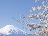 Cherry blossoms and Mt Fuji  Japan