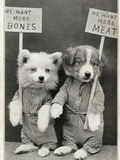 We Want More Bones  We Want More Meat