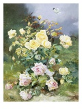 A Still Life of Pink and Yellow Roses