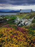 Flowers Along Carna Bay