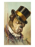 Postcard of a Bulldog Coachman Asleep
