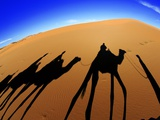 Shadows of Camels