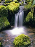 Mossy Rocks and Creek Waterfall