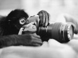 Monkey Holding Camera