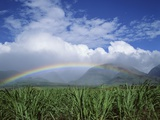 Rainbow Above Sugar Cane Field on Maui