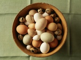 Variety of Eggs in a Bowl